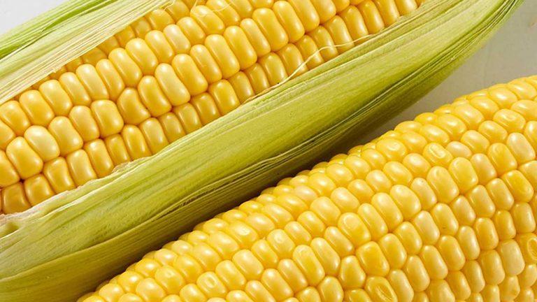 corn allergy